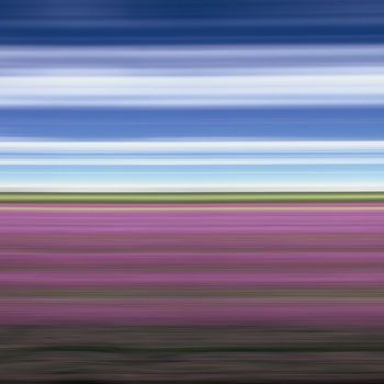 Lavender Field II, North Yorkshire, England 2007