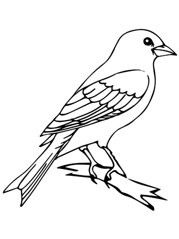 Canary Bird Perched On Tree Coloring Pages Best Place To Color In 2020 Bird Drawings Tree Coloring Page Canary Birds
