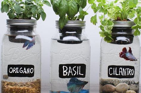 Gift ideas for plant lover is part of Hydroponics diy, Growing food indoors, Backyard aquaponics, Aquaponics system, Hydroponic gardening, Aquaponics - unique gift ideas including DIY and free ideas!
