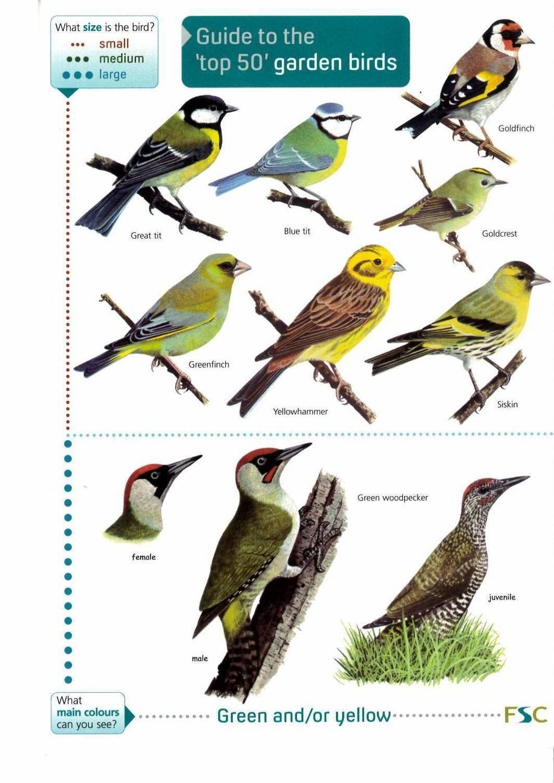 FSC Top 50 Garden Bird Guide | Bird garden, Bird guides ...
