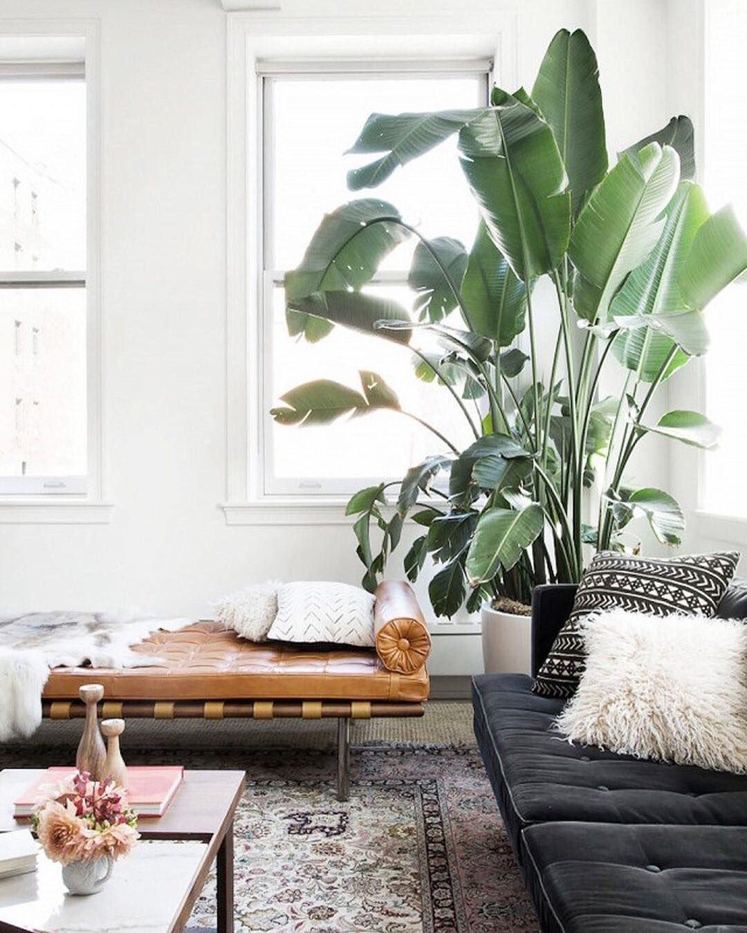 Pin by Kelsey Knipe on Home | Pinterest | Flats, Plants and Living rooms