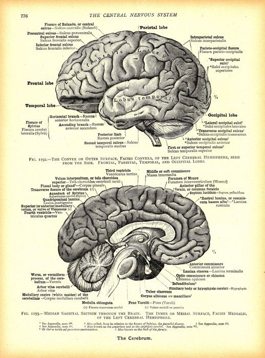 Vintage Brain Illustra...
