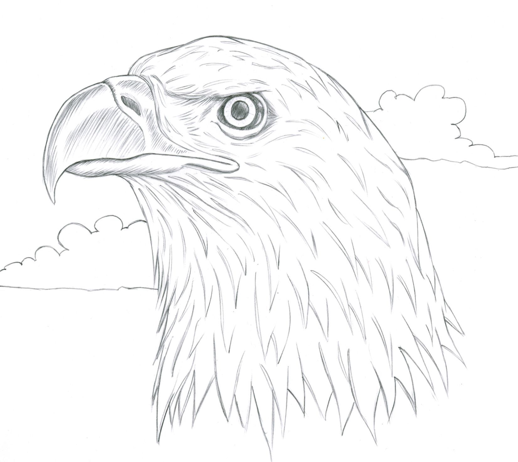Pin by Jenna Moffitt on drawings in 2019 | Eagle drawing ...