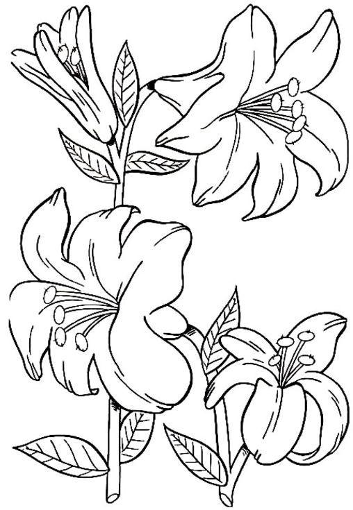 Blumen Malvorlage Ausmalbilder Für Kinder Kalender Weihnachten