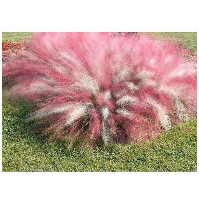 Cotton candy grass Super cute Just saw this on QVC Outside