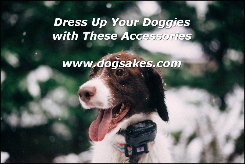 Interactive Dog Toys Exercise How To Treat Your Dog - Dog Sakes