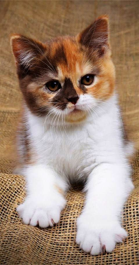 Free Cats And Kittens Near Me Where Cute Animals In Costumes Video Cute Animals Cute Cats Cute Cats And Kittens