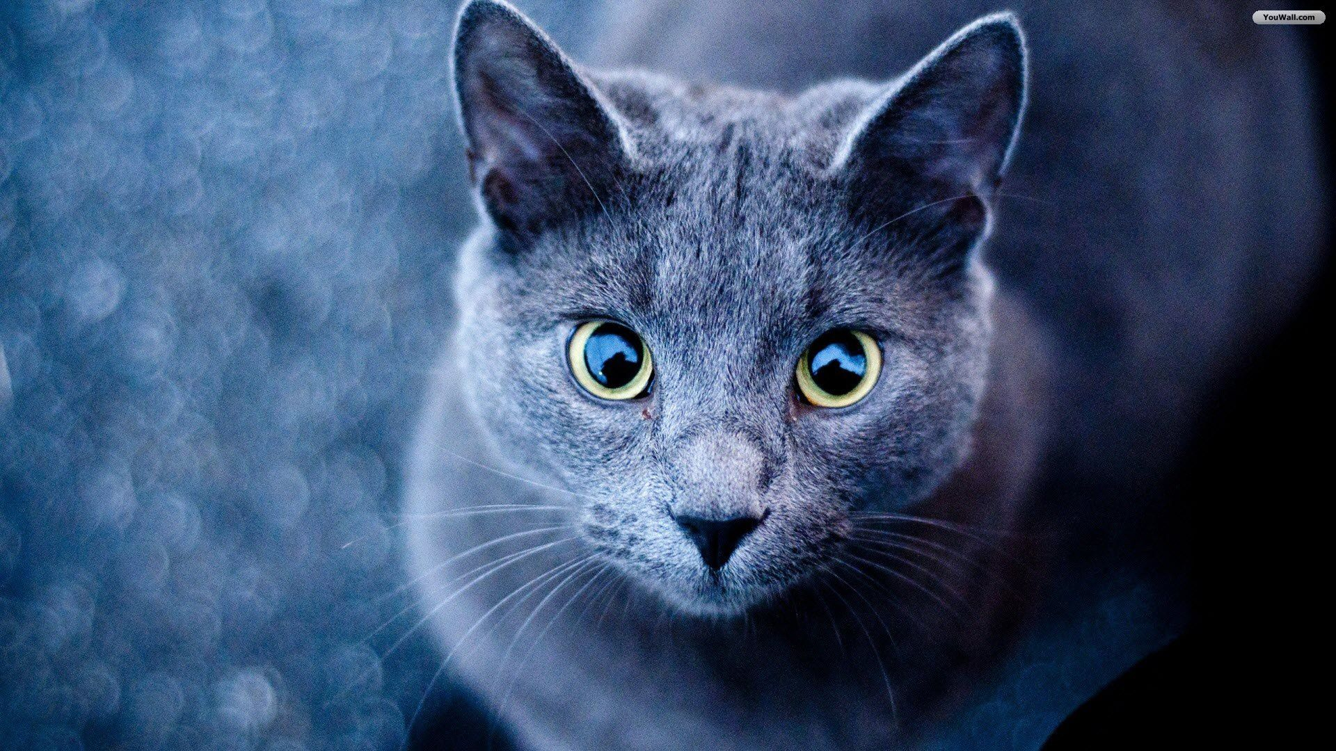 Cute Cats Wallpapers Wallpaper 1280×1024 Cats Images