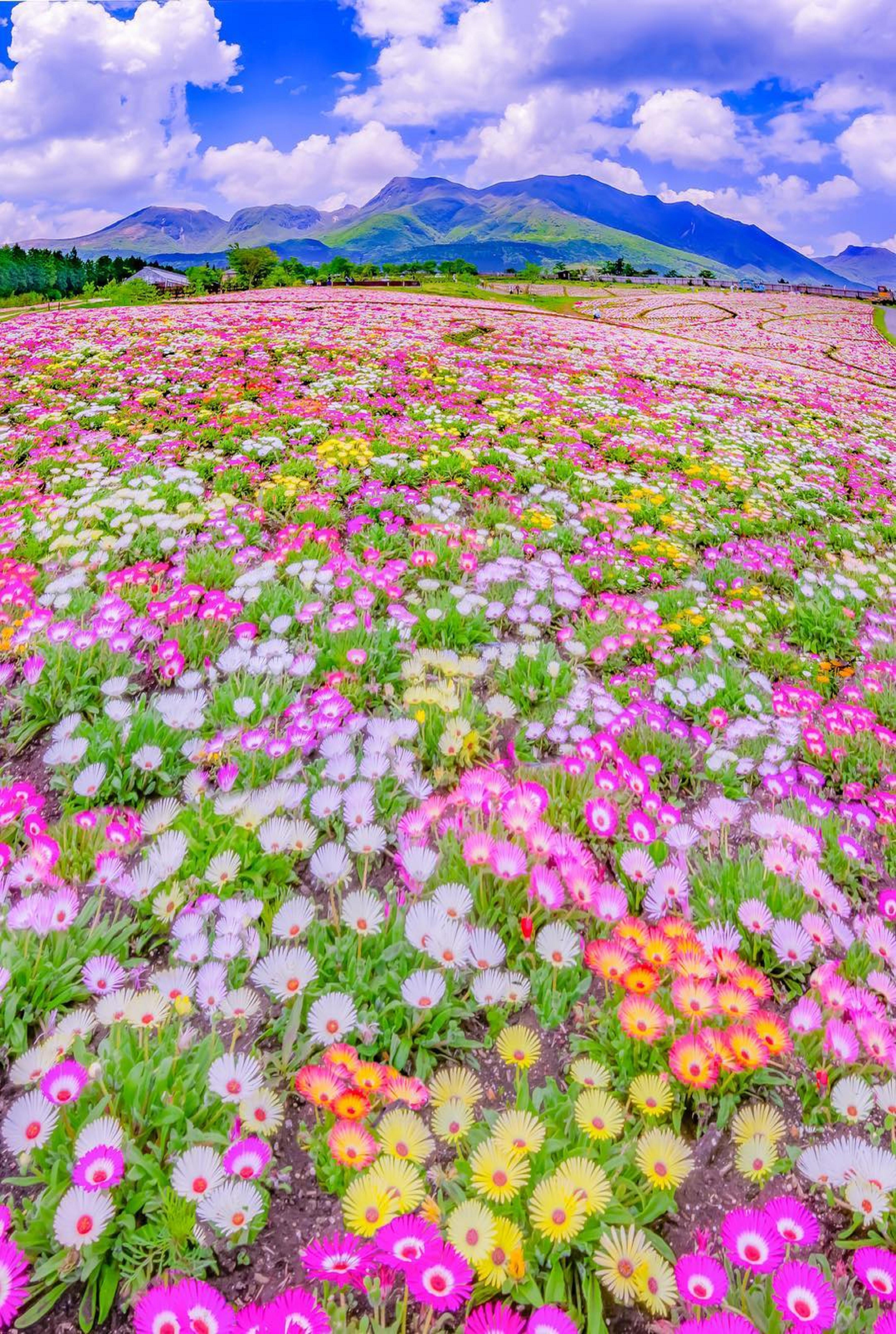 Kuju Flower Park Japan Beautiful Landscapes Nature Nature Photography