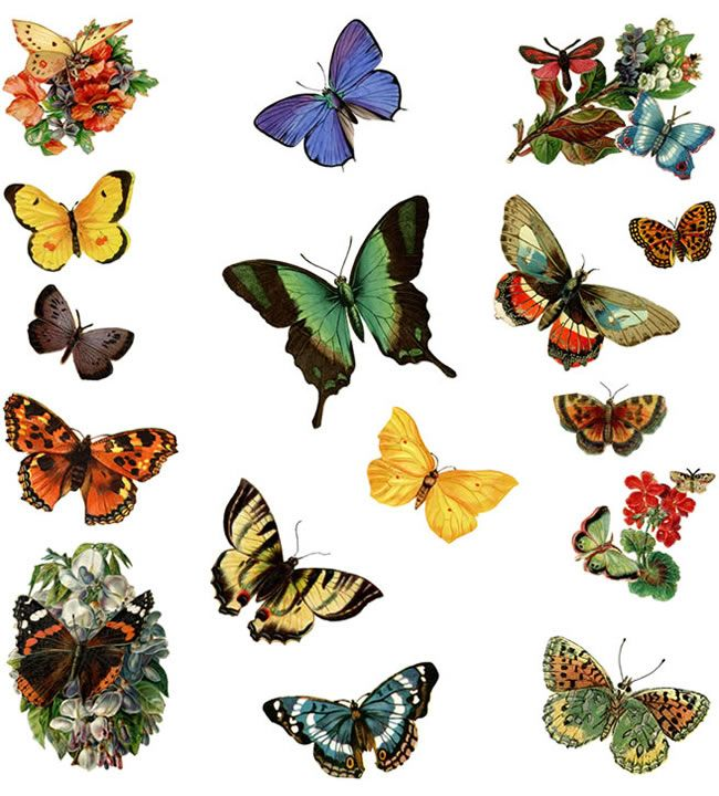 dover publications free samples in your email the pictorial rh pinterest com dover clip art free dover clip art illustrations
