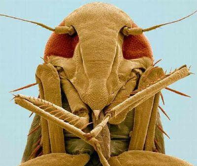 vida microscopica ciencia y arte - Buscar con Google Vista Microscópica de Insectos