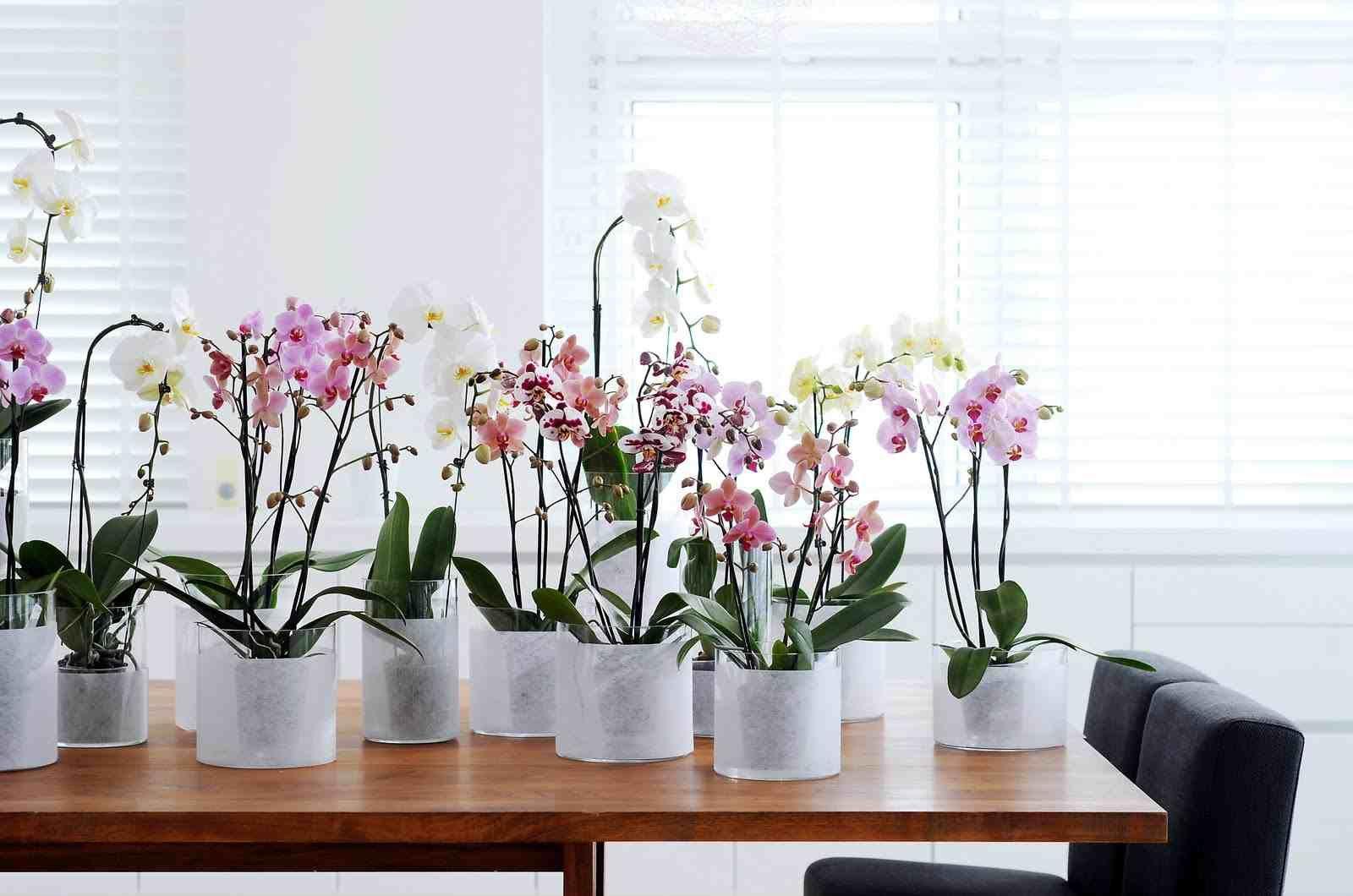 comment entretenir une orchid e d couvrez nos conseils de. Black Bedroom Furniture Sets. Home Design Ideas
