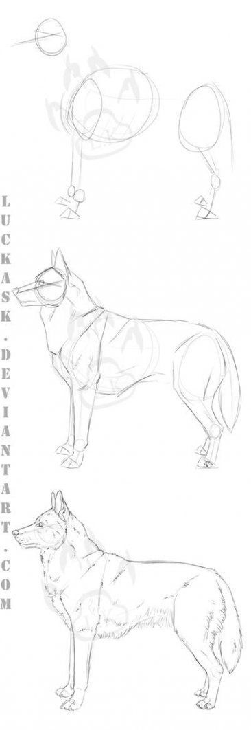 Photo of How to Draw a Dog Side View 57+ Ideas