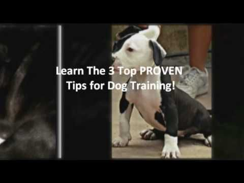 Pitbull Dog Training - How to Train a Pitbull - http://www.doggietalent.com/2014/12/pitbull-dog-training-how-to-train-a-pitbull/