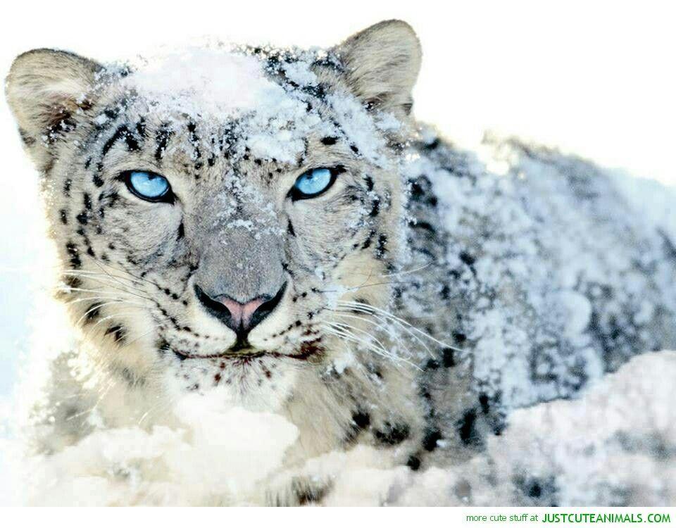 Pin de Raymond Johnson en Best Exotic Animals | Pinterest