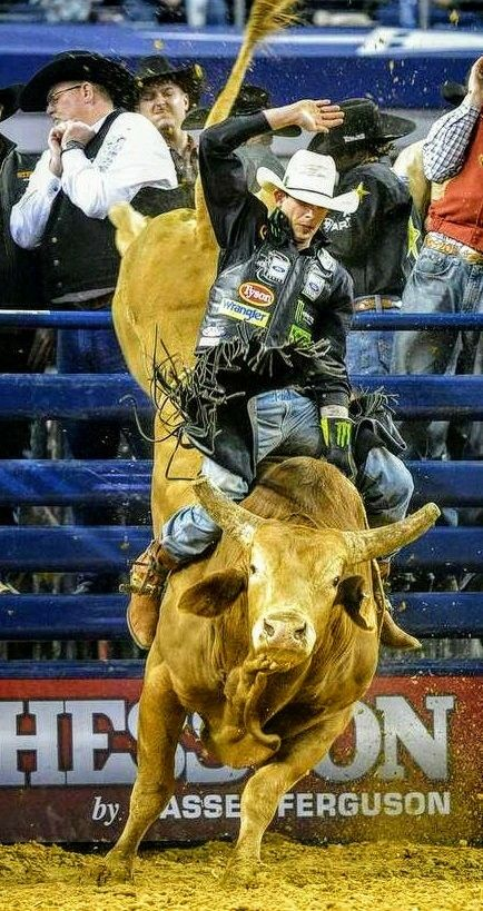 Bull Riding Rodeo Pbr Bull Riders Pbr Bull Riding Bull Riders