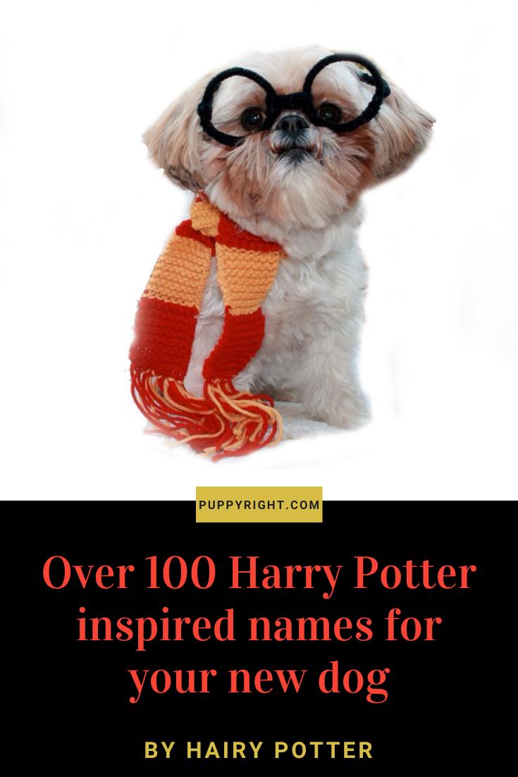 100 Harry Potter Dog Names In 2020 Harry Potter Dog Names Harry Potter Dog Harry Potter Pet Names