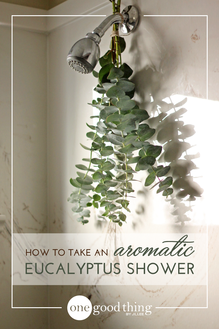 How To Take An Aromatic Eucalyptus Shower Eucalyptus Shower Shower Plant Fun To Be One