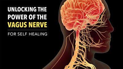 Unlocking the Power of the Vagus Nerve | Vagus nerve ...