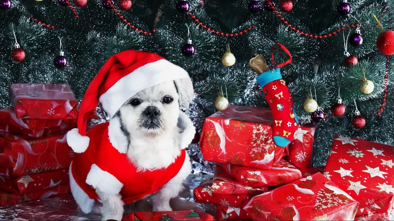 click to download the image preview wallpaper dog new year gifts christmas tree ornaments related hashtags