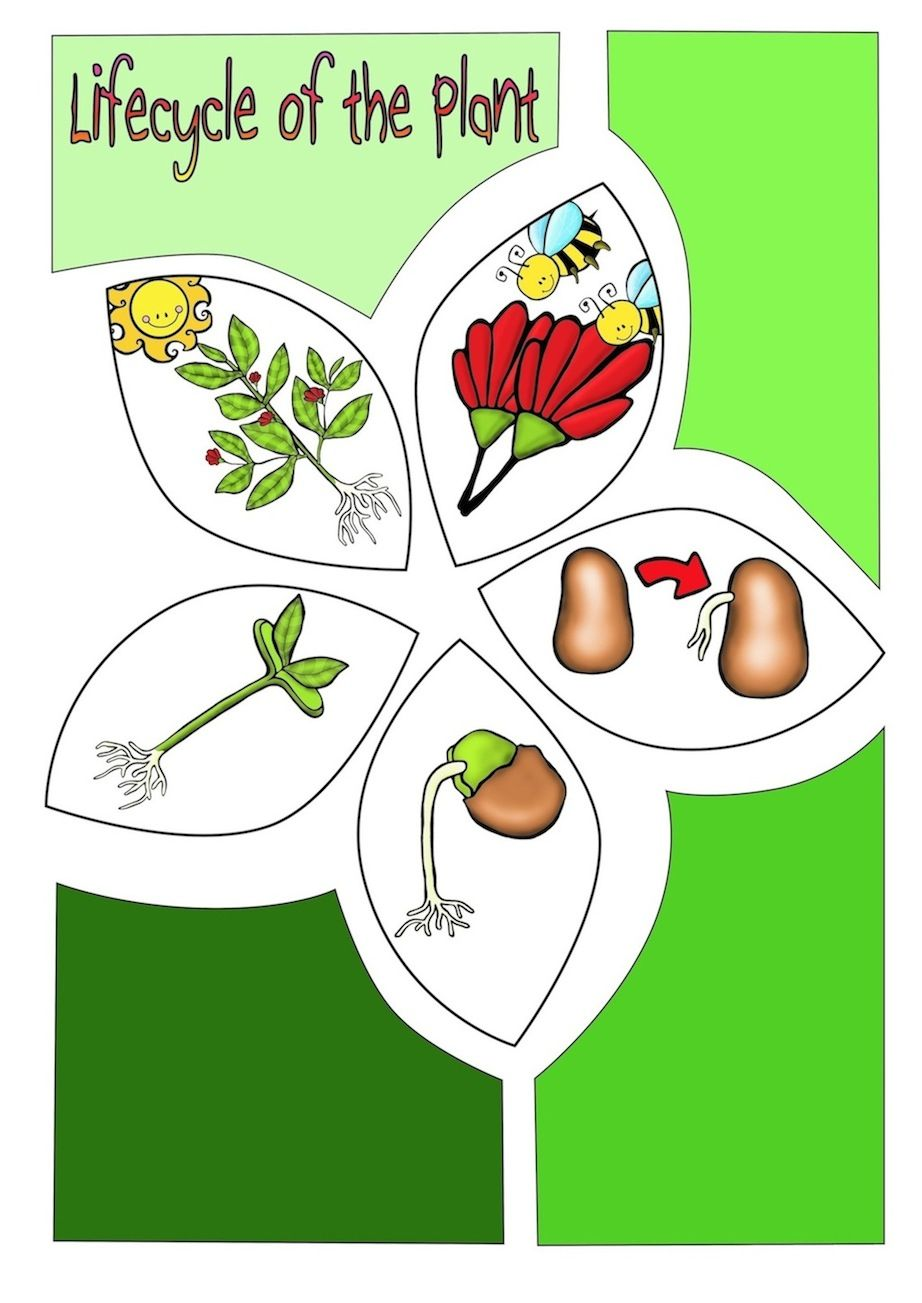 Comic Book Create A Comic Book On The Life Cycle Of The Plant This Unit Is Packed With Activities Diagrams F Life Cycles Plant Life Cycle Science Booklets [ 1303 x 922 Pixel ]