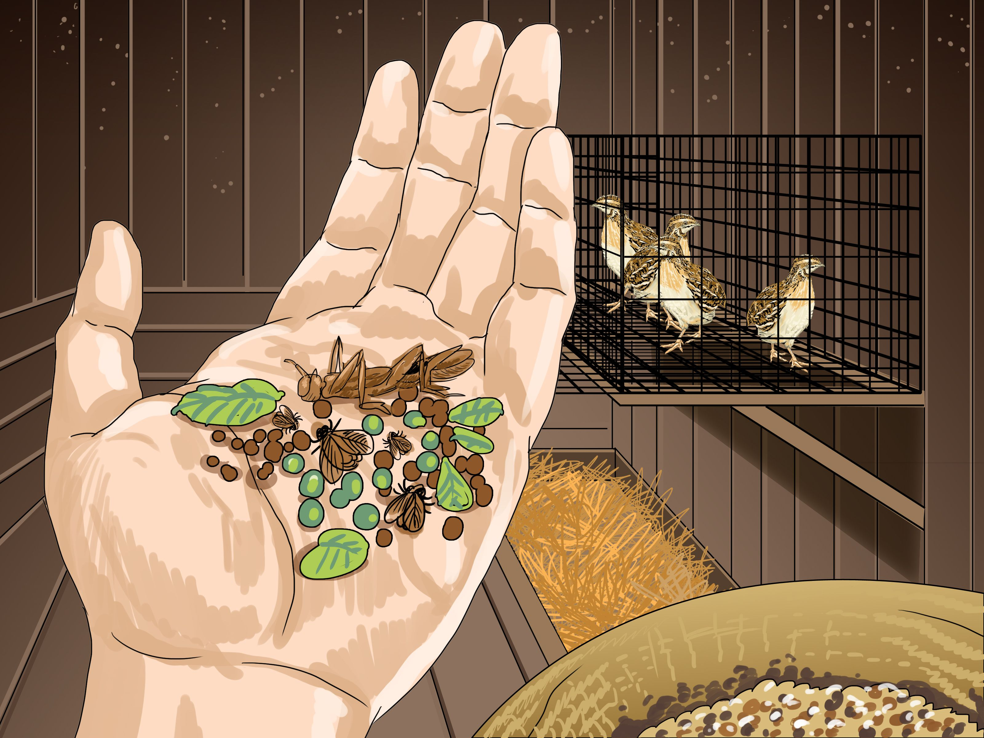 raise quail raising quail quails and raising