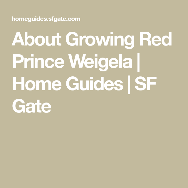 About Growing Red Prince Weigela Gardening Red Prince