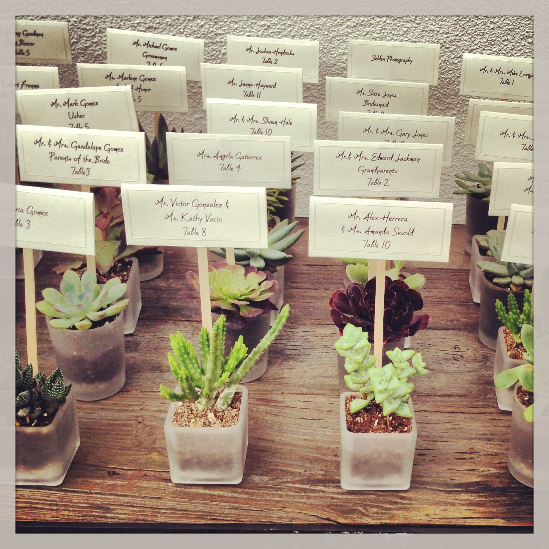 succulent table assignments party favors expensive for a large