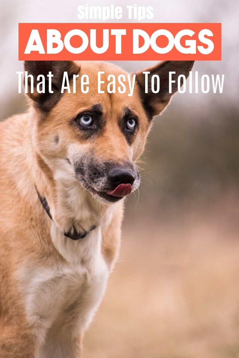 Learn About Caring For A Dog With This Article Dog Training