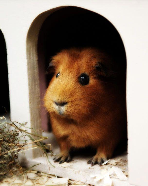Pin On Hamster Bwains