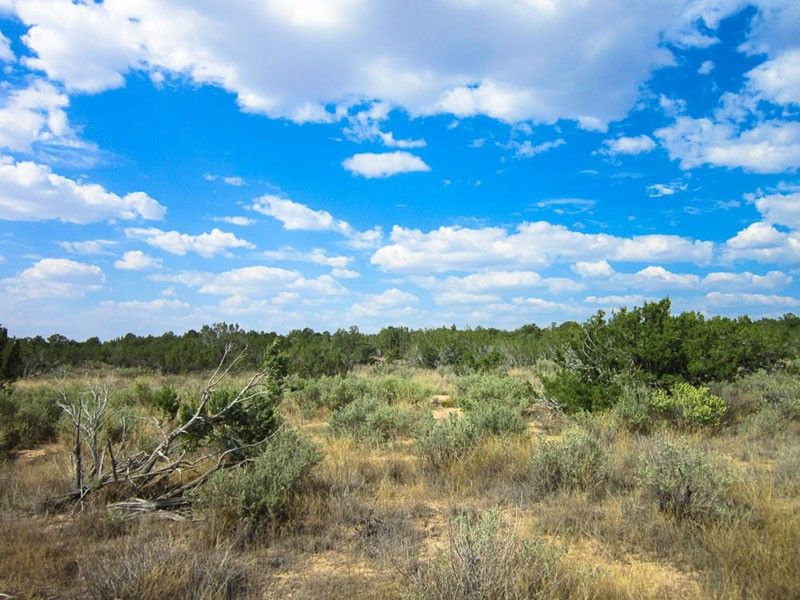 The Great Land Giveaway!!! Win 2 5 acres in Arizona