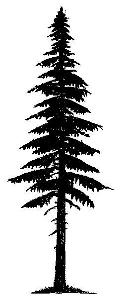 Pin By Gaby Khairallah On Wood Burning Pinterest Tattoos Pine