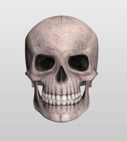 Skull Low Poly 3d Models Low Poly 3d Skull