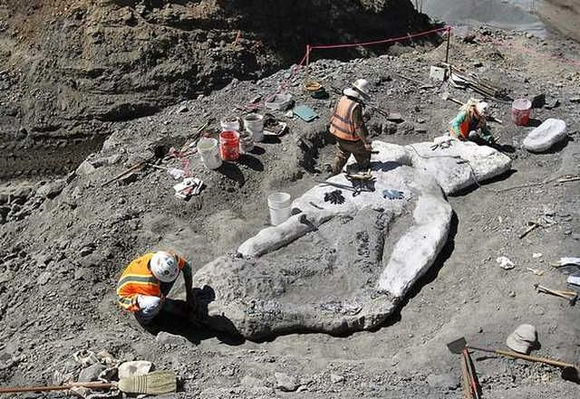 Ancient Whale fossil discovered in Santa Cruz mountains  , - ,   4-million-year-o...