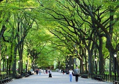 Central Park Greenery - 50 Sceneries That Will Make You Fall in Love with New York ... [ more at http://travel.allwomenstalk.com ] SourceFor a busy city, surprisingly New York has lots of greenery on every corner you turn.... #Travel #Picture #Central #Eataly #Library #City