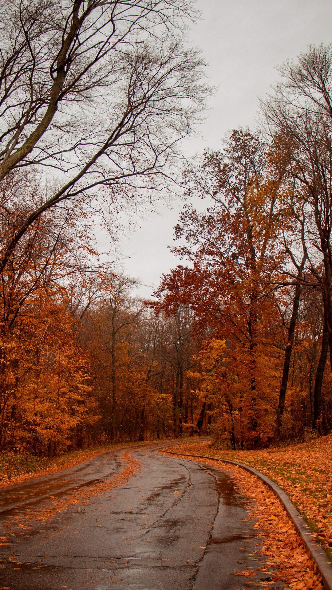 تحميل صور خلفيات مربع Country Roads Country Road