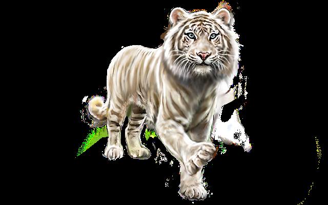 White Tiger Images Tiger Free Png Images Tiger Images Free Png Png Images
