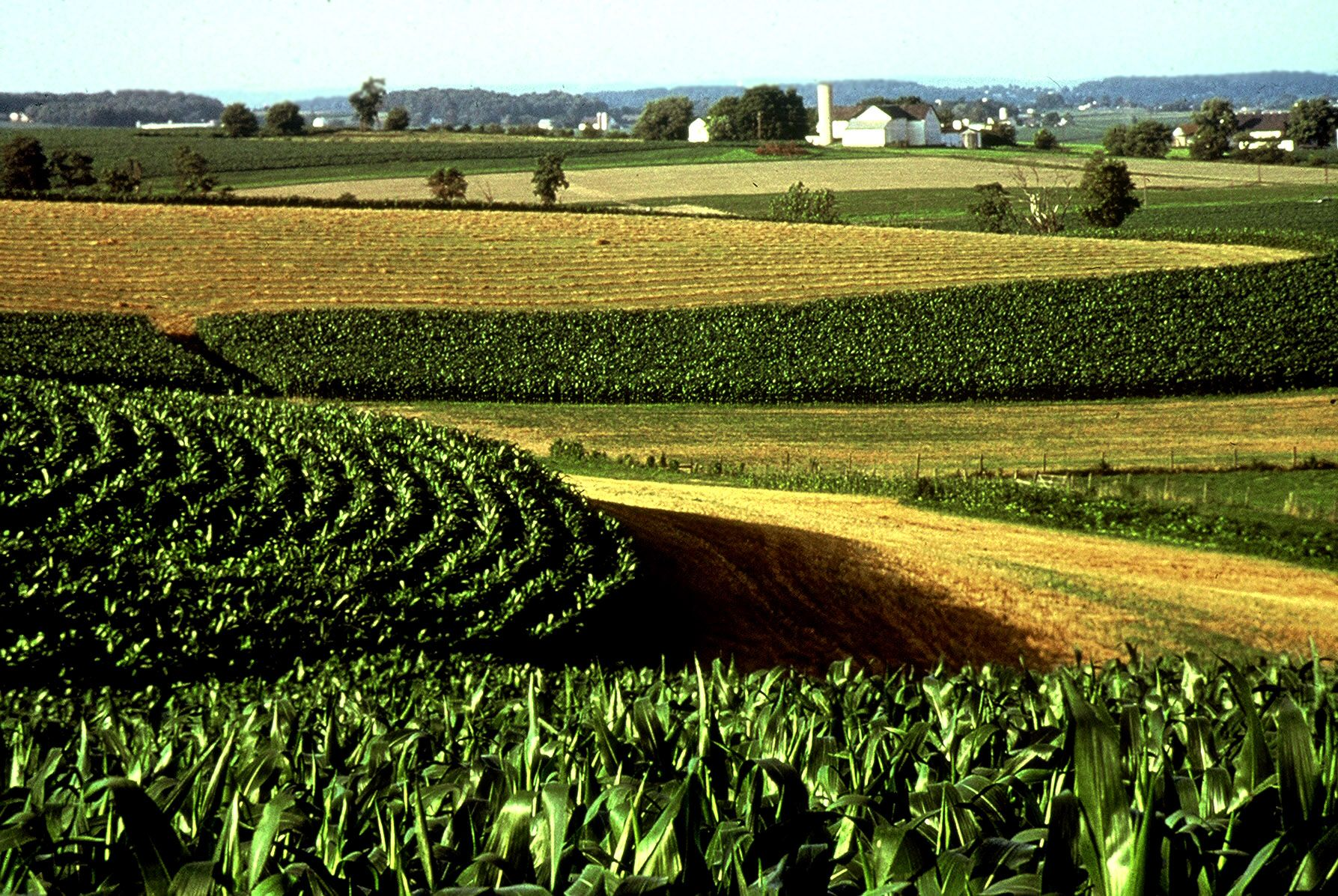 Iowa Corn Fields Stayed With A Farm Family As Part Of A