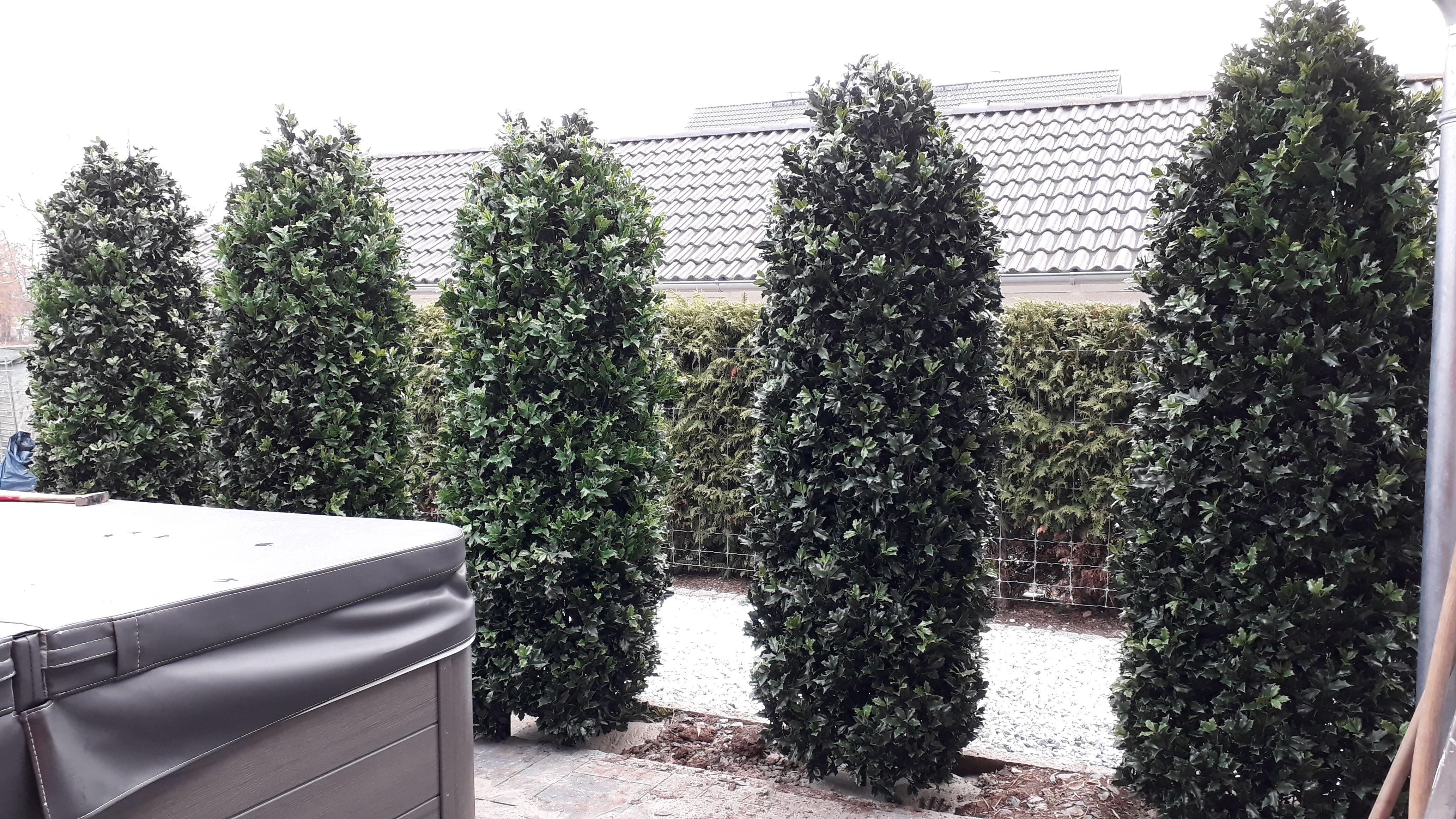 Individuelle Wetterfeste Kunstpflanzen Bellaplanta Garten