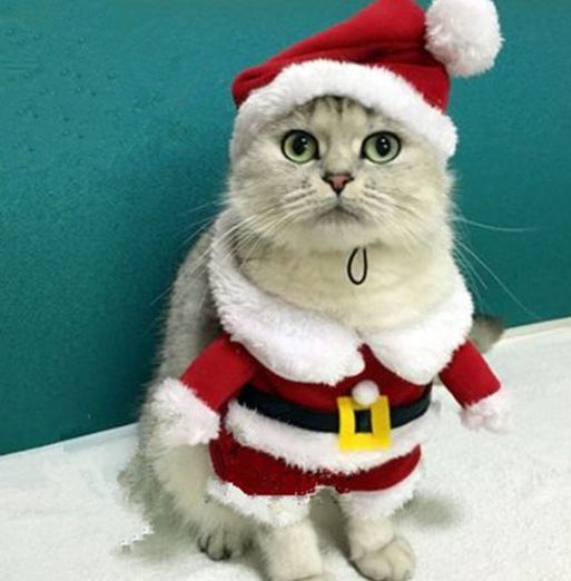 Please read size chart below NECK CHEST XS - 26CM 13CM S 30CM 14CM M 32CM  17CM L 36CM 19CM XL 39CM 21CM - Santa Cat Costume Animals I Want To Steal Cats, Christmas Cats
