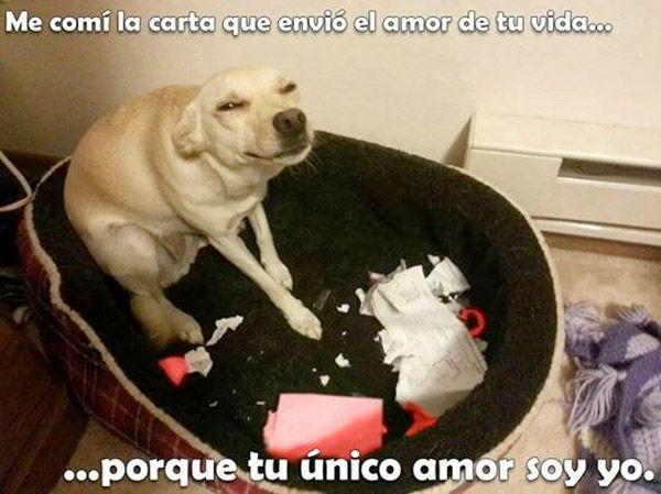 Tu Unico Amor Soy Yo Funny Video Memes Memes Animal Memes