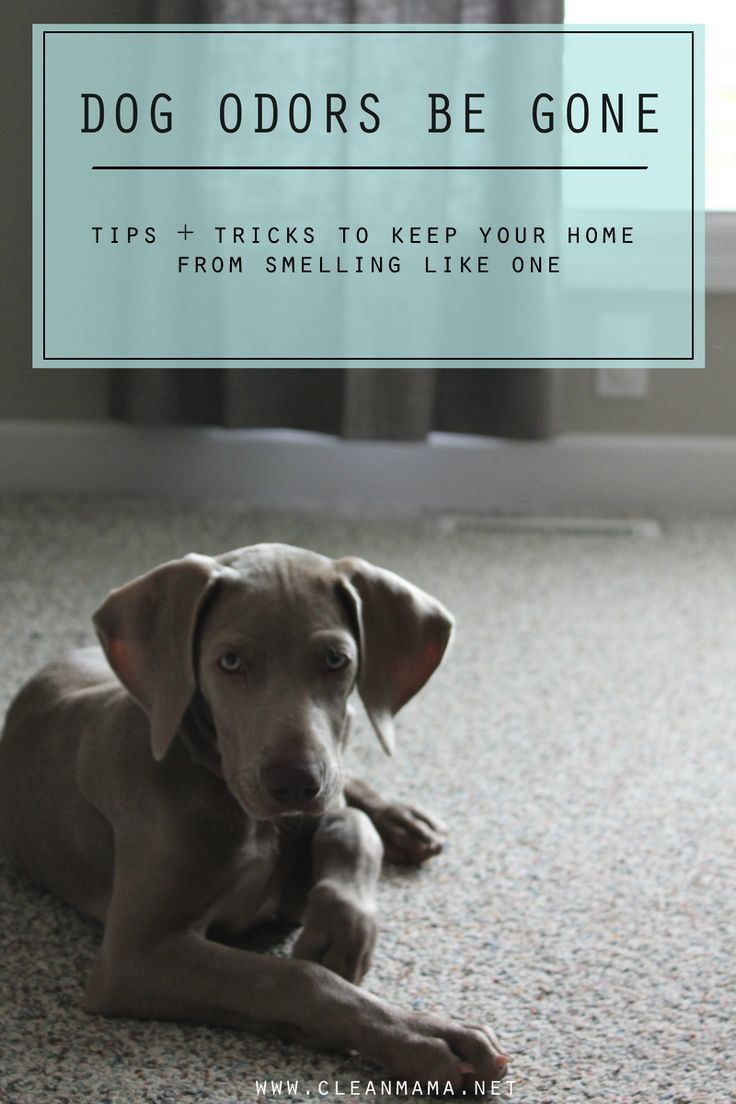 Dog odors be gone dog smells pet odors deep cleaning tips