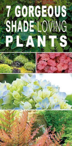 7 Gorgeous Shade Loving Plants Jardinería