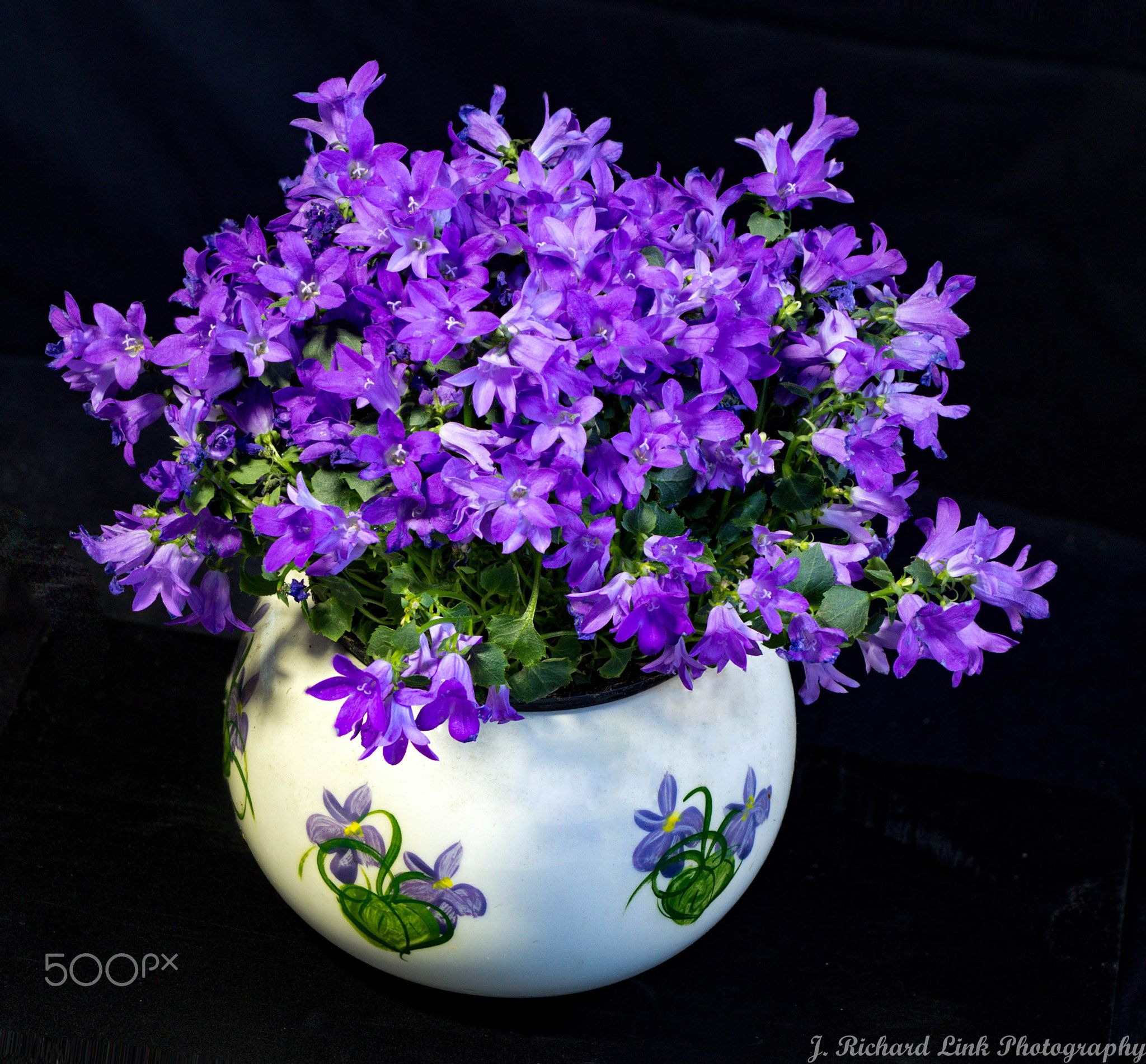 Campanula Get Mee Campanula Is One Of Several Genera In The Family Campanulaceae With The Common Name Bellflower It Takes Both Campanula Plants Bellflower