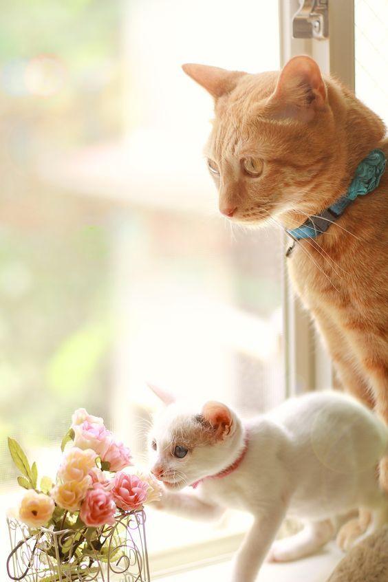 Loggardenia Smelling The Flowers Cats Cute Kitten