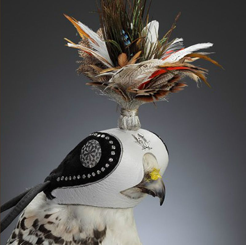 Formal Falconry Tiroler Goldschmied S Exclusive Diamond Studded Hawk Hoods In Abu Dhabi If It S Hip It S Here Falconry Falconry Equipment Falcon Hunting