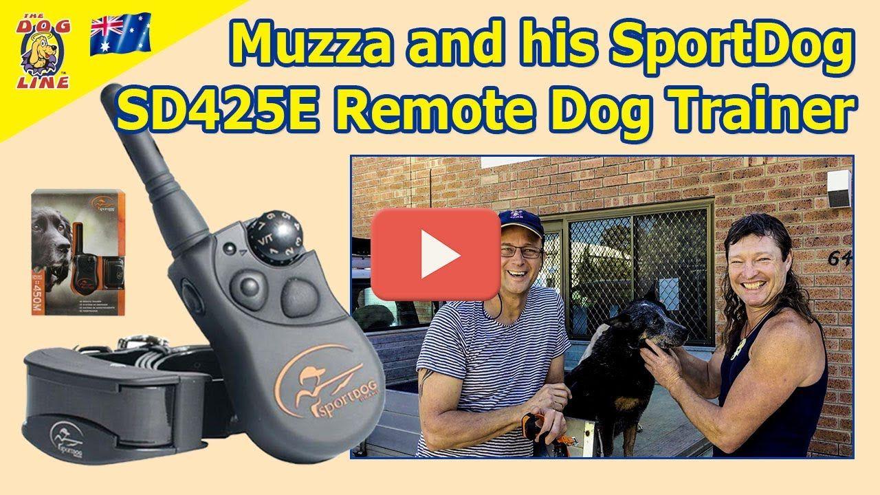 Muzza And His Sportdog Sd425e Remote Dog Training Collar Under