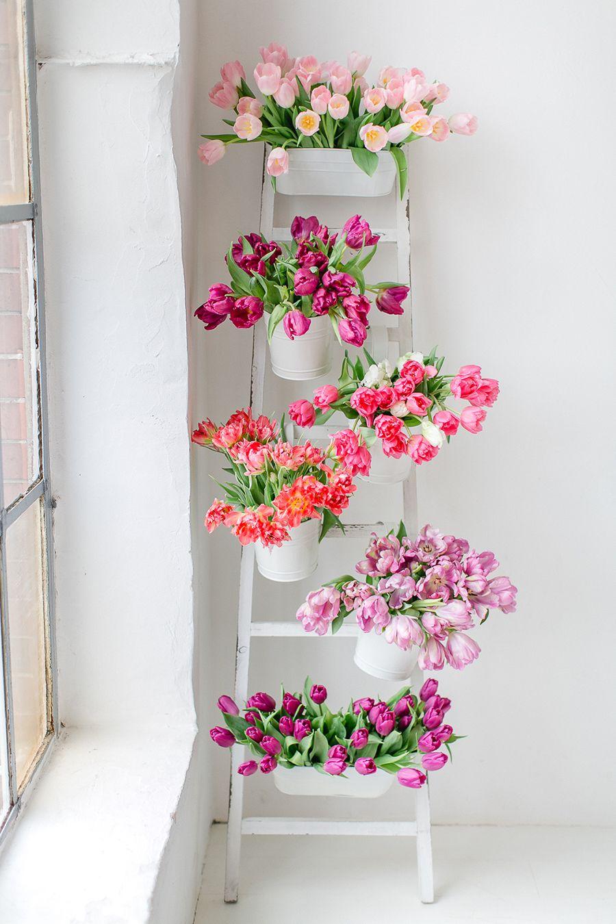 Blume Des Monats Marz Tulpe Flowers Blumen Tulpen Fotografie