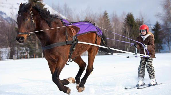 The first competitive skijoring races were held in Scandinavia as an offshoot of the older sport of pulka. For those unfamiliar with this winter sport, skijoring involves a horse, dog(s) or a motor vehicle pulling a skier. Races are held all around the world where there is snow in the winter. The longest race is held in Kalevala, Karelia, Russia. Skiers pulled by dogs must race 270 bone-chilling miles to cross the finish line.