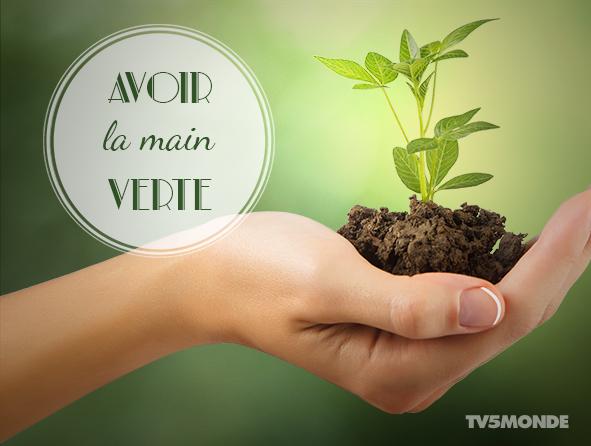 plante verte expression